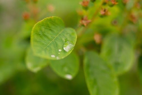 Δωρεάν στοκ φωτογραφιών με βροχή, σταγόνα νερού, σταγόνες βροχής