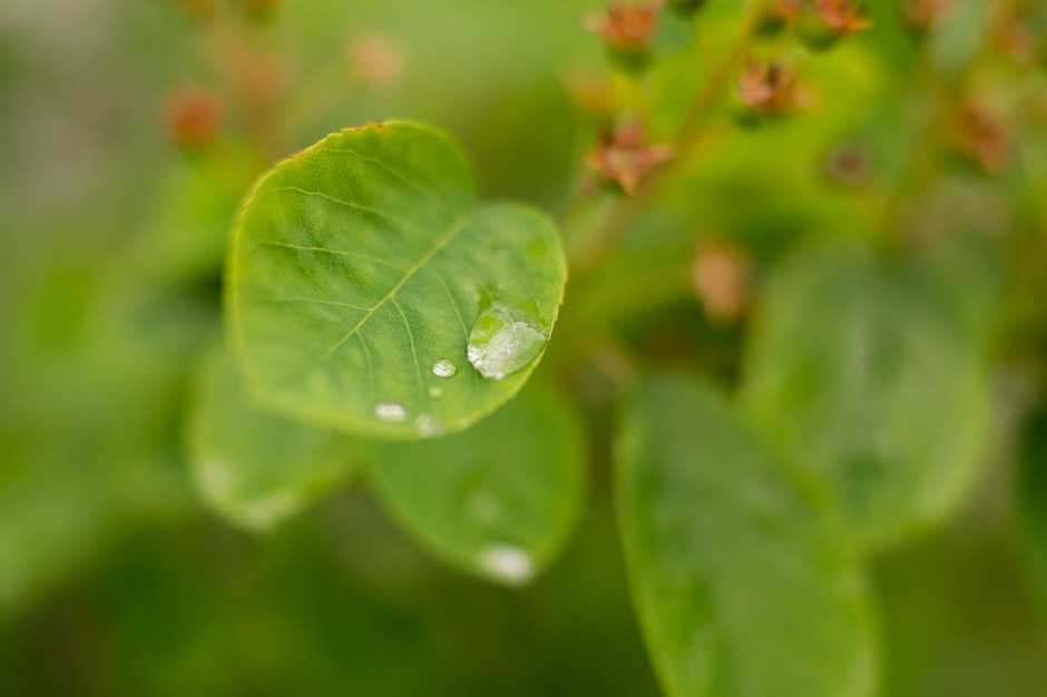 drop of water, leaf, rain