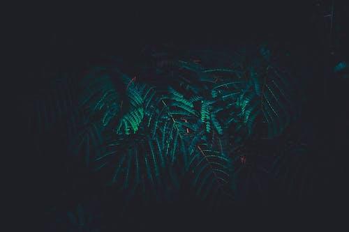 Albero Di Felce Verde