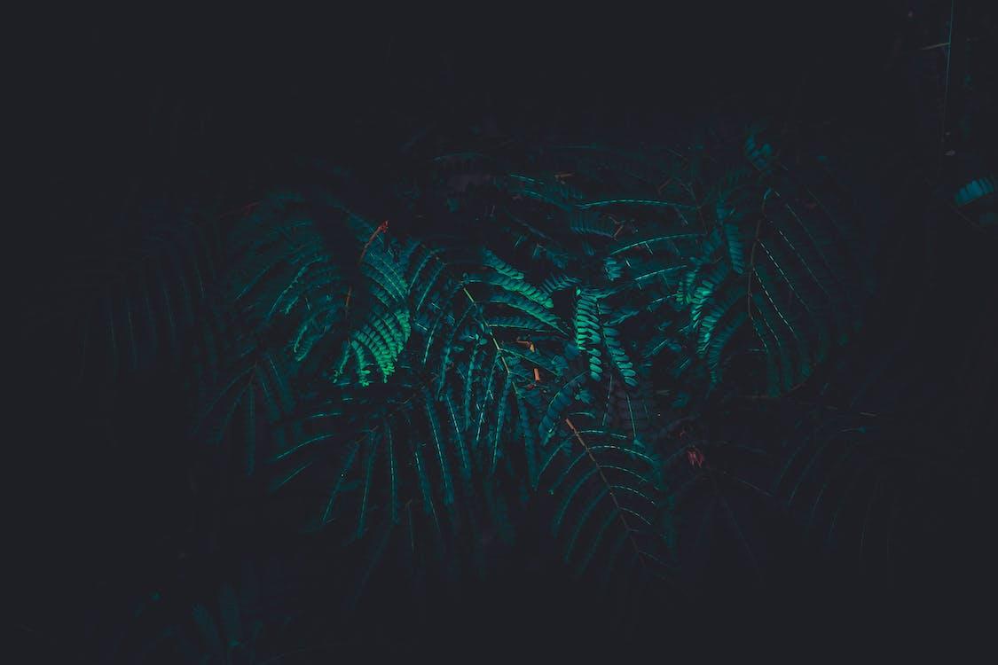 árvore de samambaia, aumento, cor