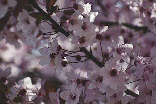 分公司, 微妙, 春天, 植物群 的 免費圖庫相片