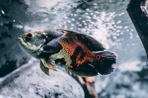 Základová fotografie zdarma na téma akvárium, barva, fotografování zvířat, jezero