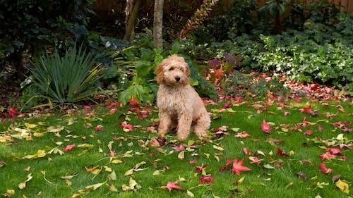 桃の毛皮, 桃の犬, 犬の無料の写真素材