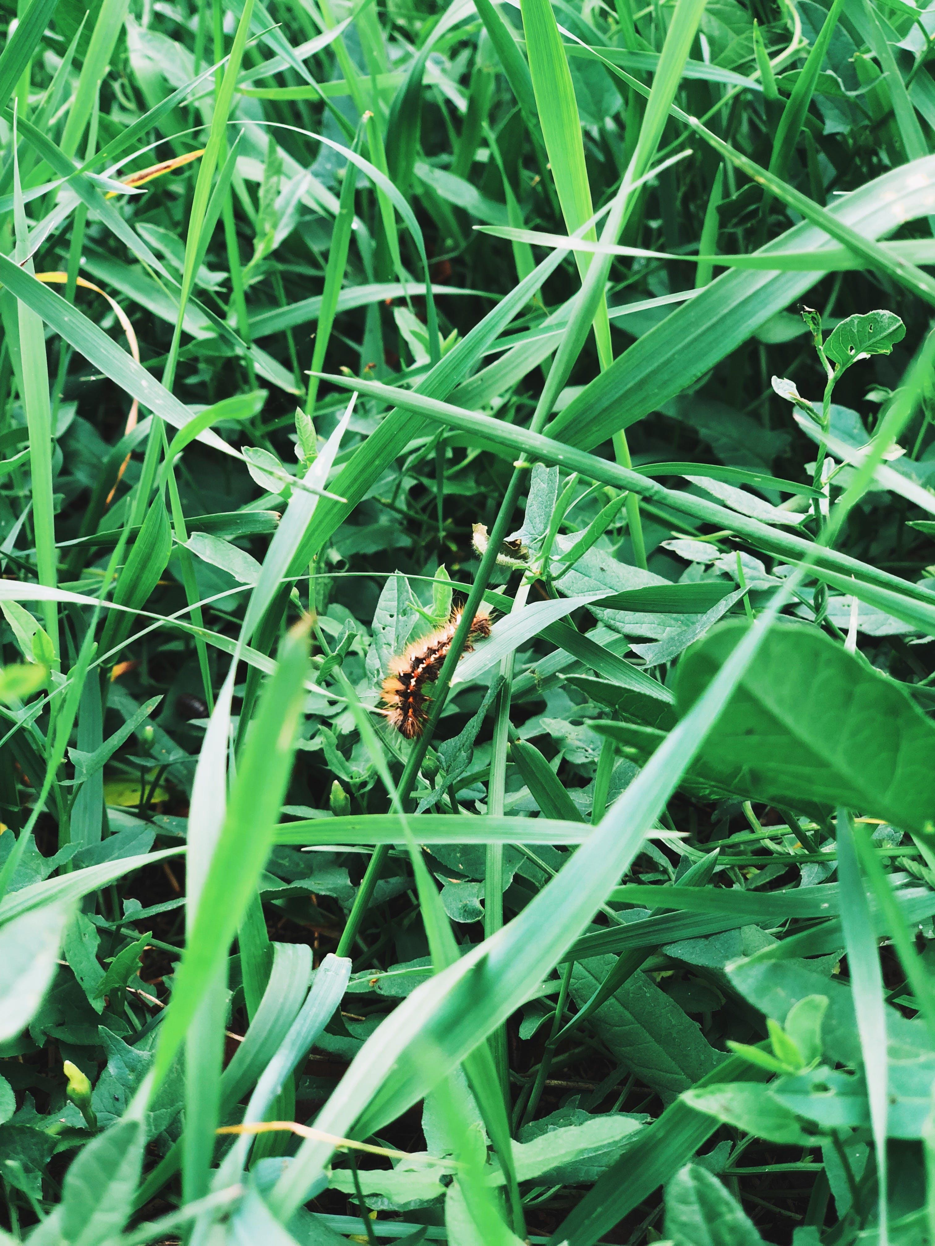 Základová fotografie zdarma na téma červ, listy, příroda, tráva