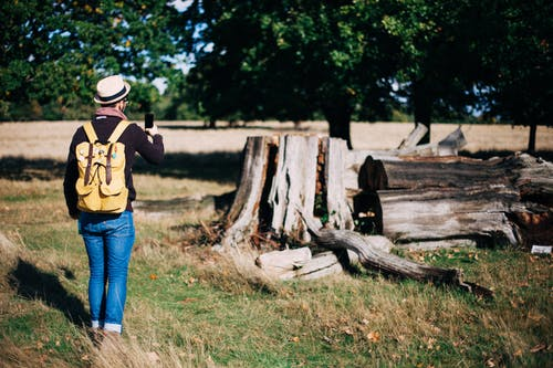 Kostenloses Stock Foto zu bäume, baumstämme, erholung, erwachsener
