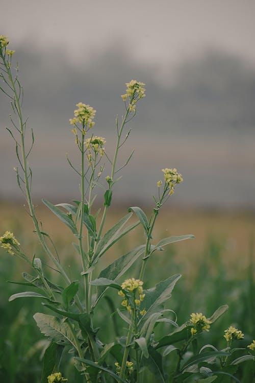 Бесплатное стоковое фото с зеленый, любовь, обои для мобильного телефона, природа