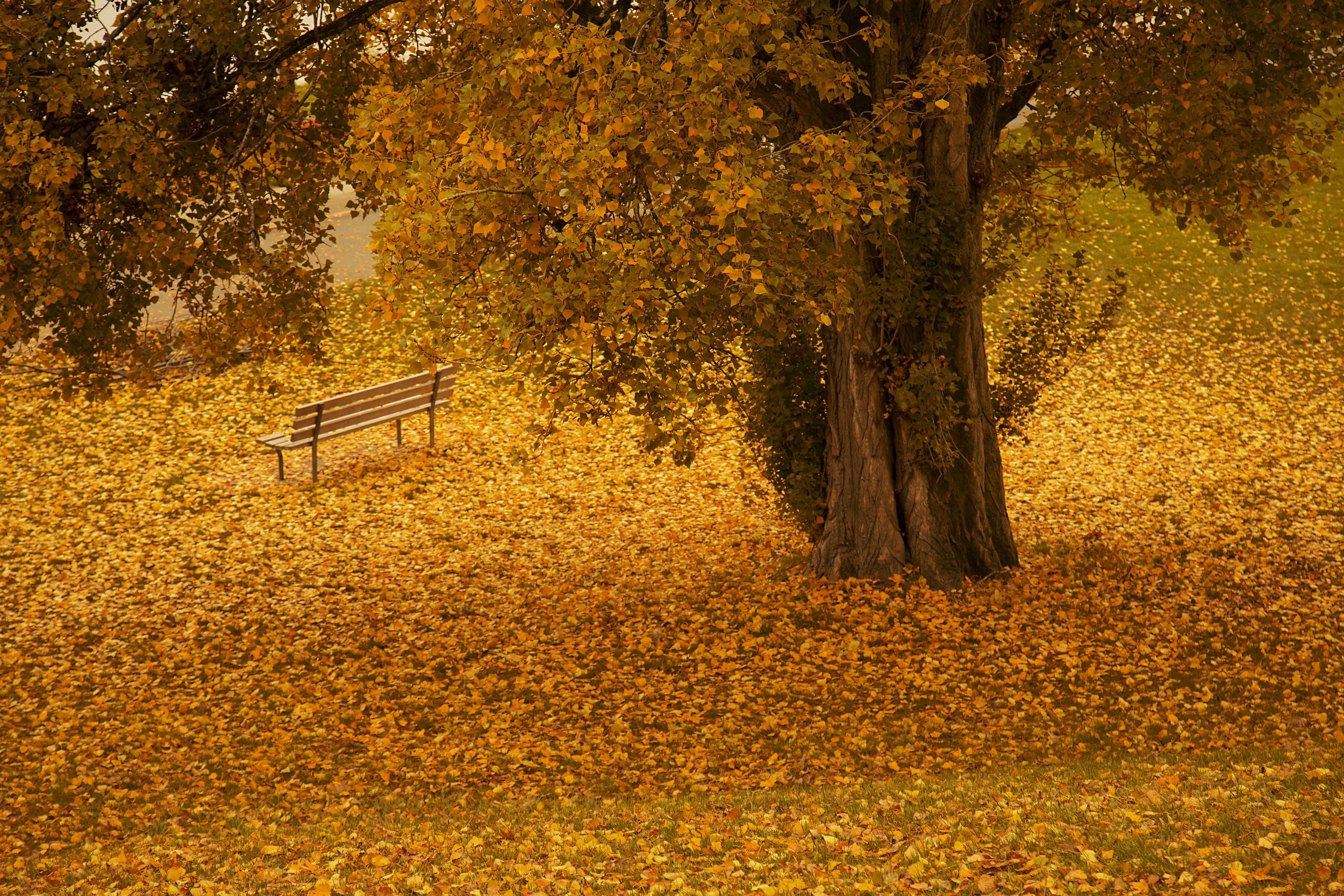 Free stock photo of park, autumn, fall, autumn leaves