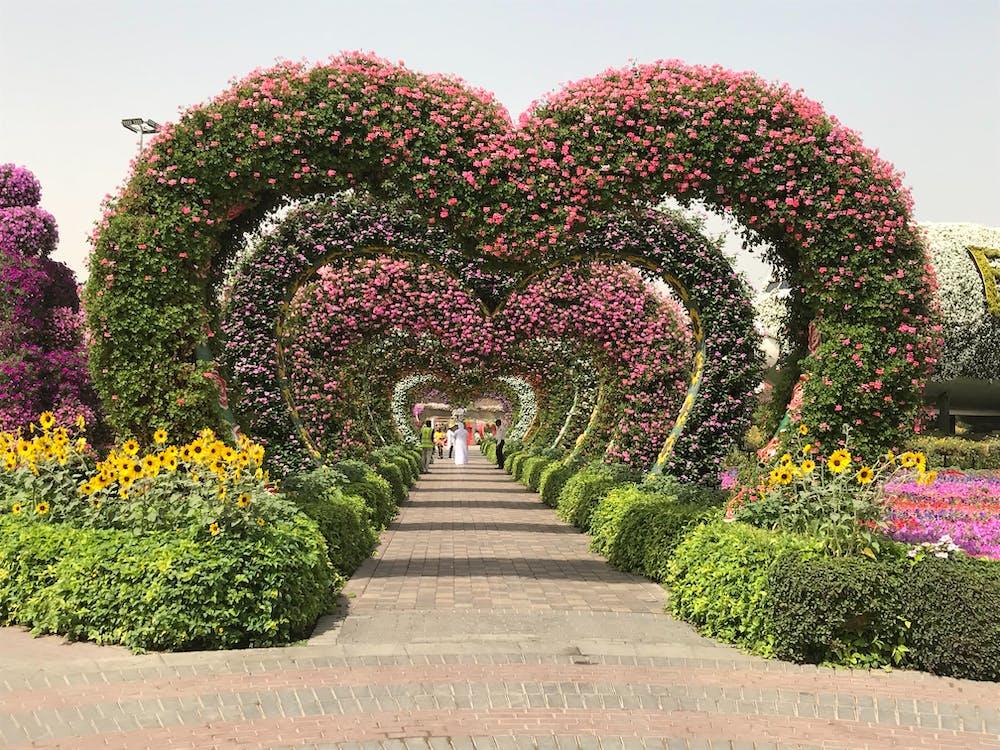 Free stock photo of dubai, dubai miracle garden, heart shape