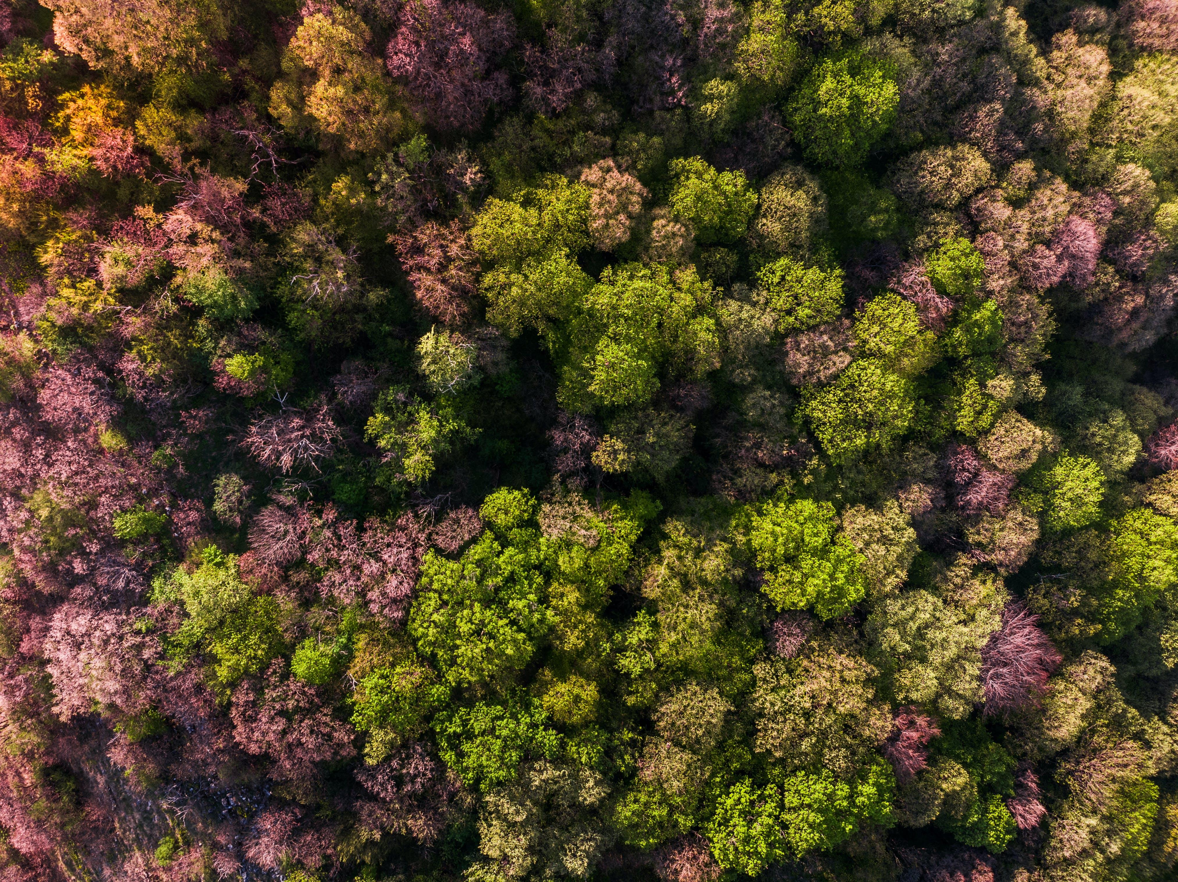 Ingyenes stockfotó erdő, fák, környezet, növényvilág témában