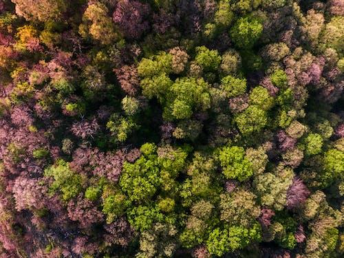 天性, 森林, 植物群, 樹木 的 免费素材照片