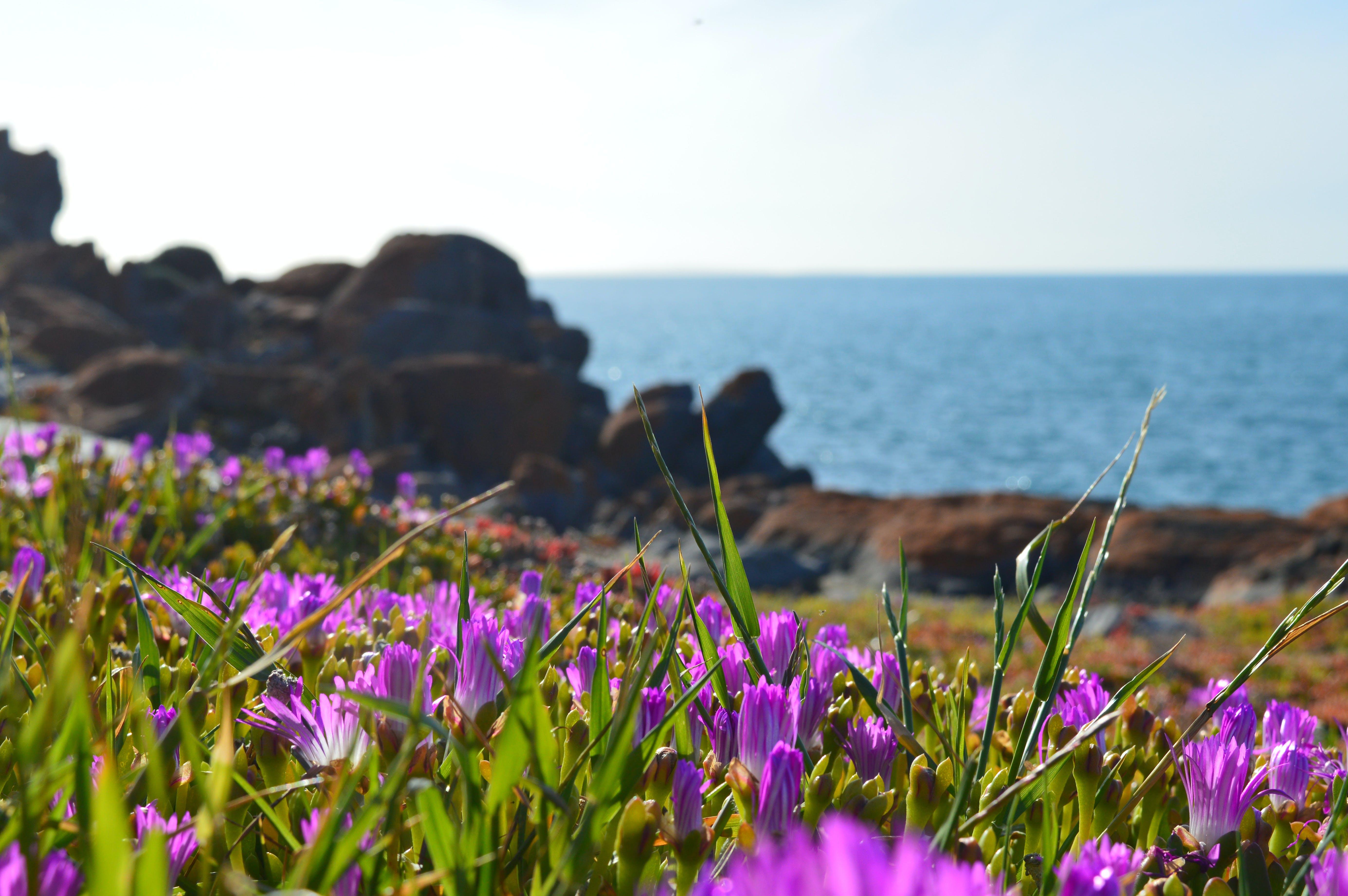 Free stock photo of summer