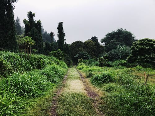 Free stock photo of jungle