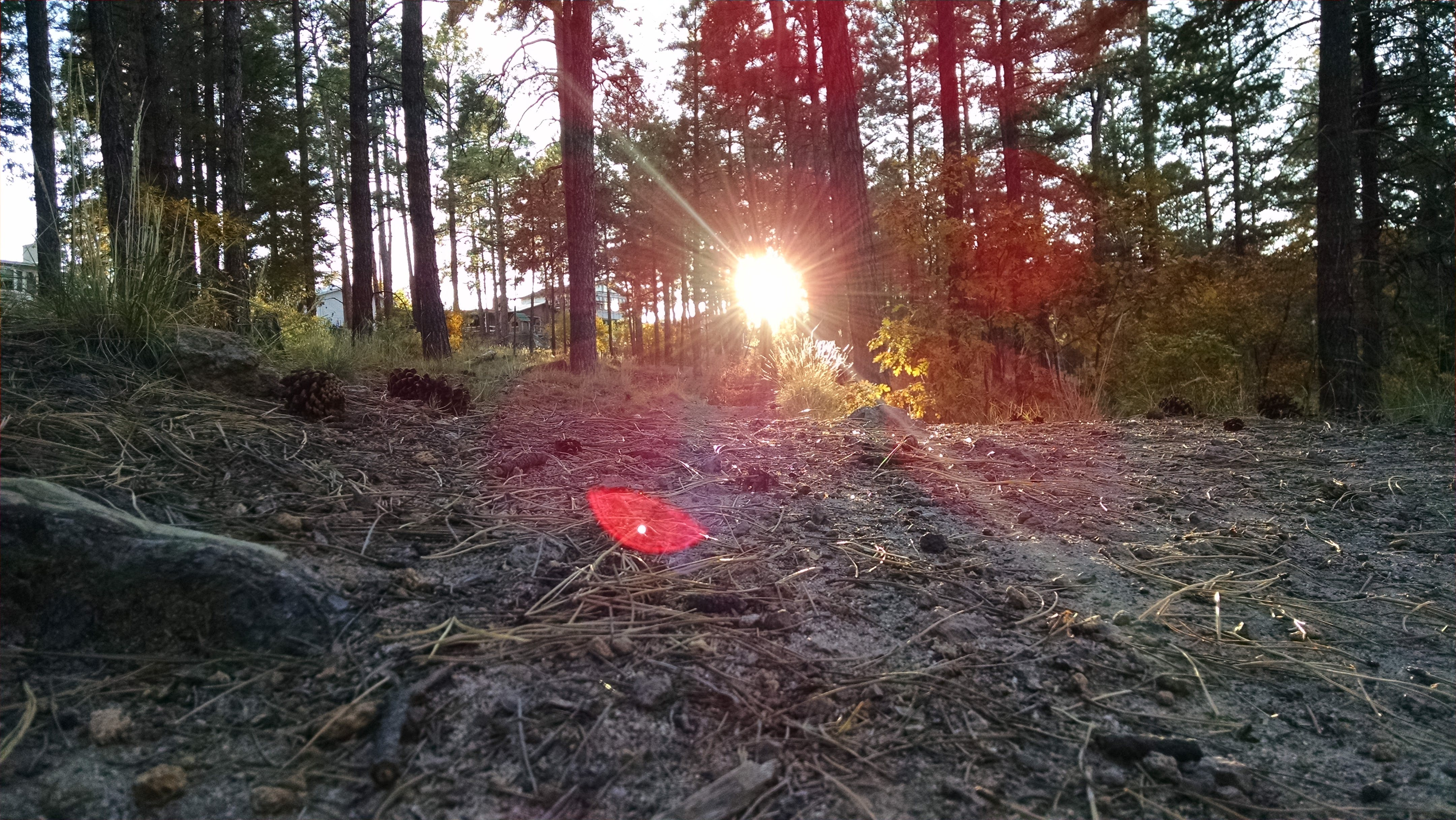 Free stock photo of dirt road, forest, hiking, sunlight
