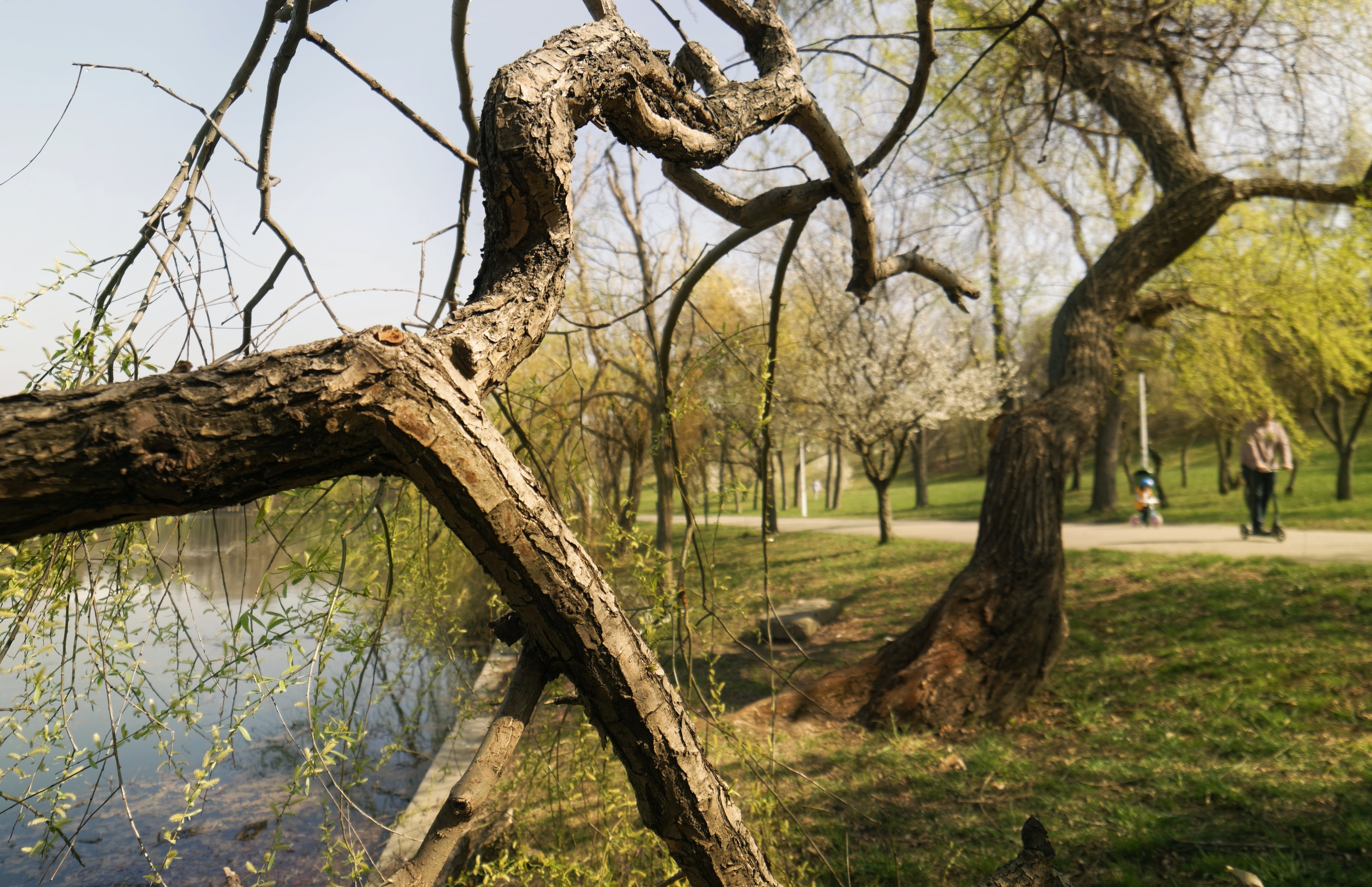คลังภาพถ่ายฟรี ของ การเดิน, คน, ต้นไม้, ทะเลสาป