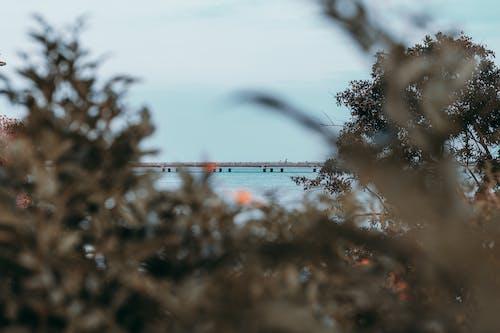 場景, 增長, 天性, 岸邊 的 免費圖庫相片