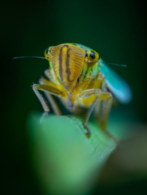 Бесплатное стоковое фото с HD-обои, животное, легкий, лист