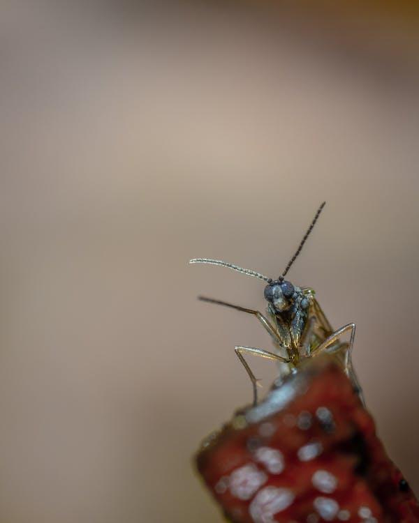 hmyz, makro