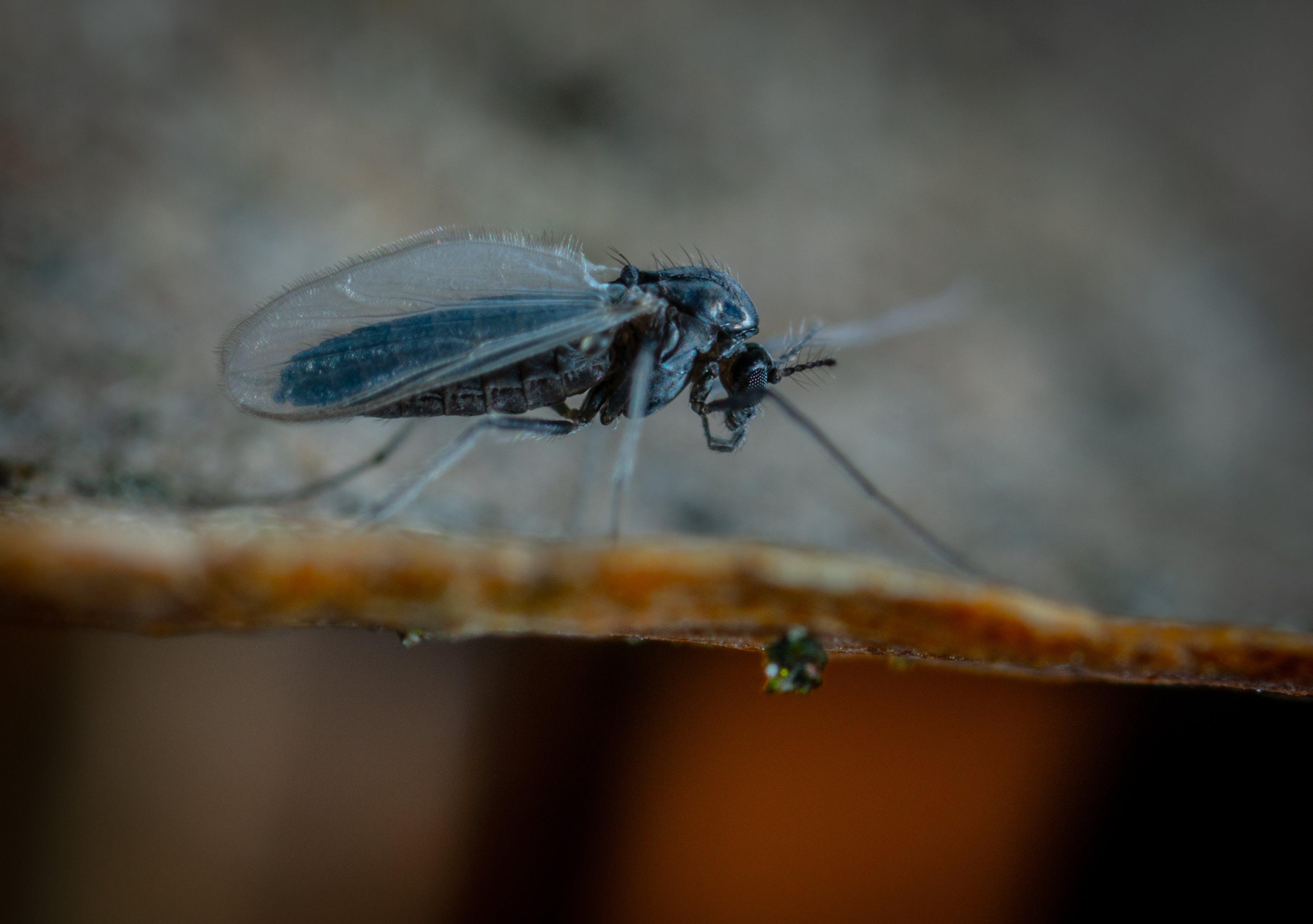 宏觀, 昆蟲 的 免費圖庫相片