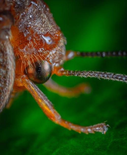 Gratis lagerfoto af insekt, makro
