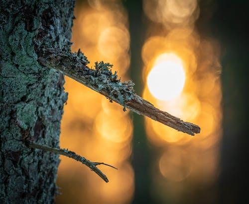 Gratis lagerfoto af aften, skov, solnedgang, træ
