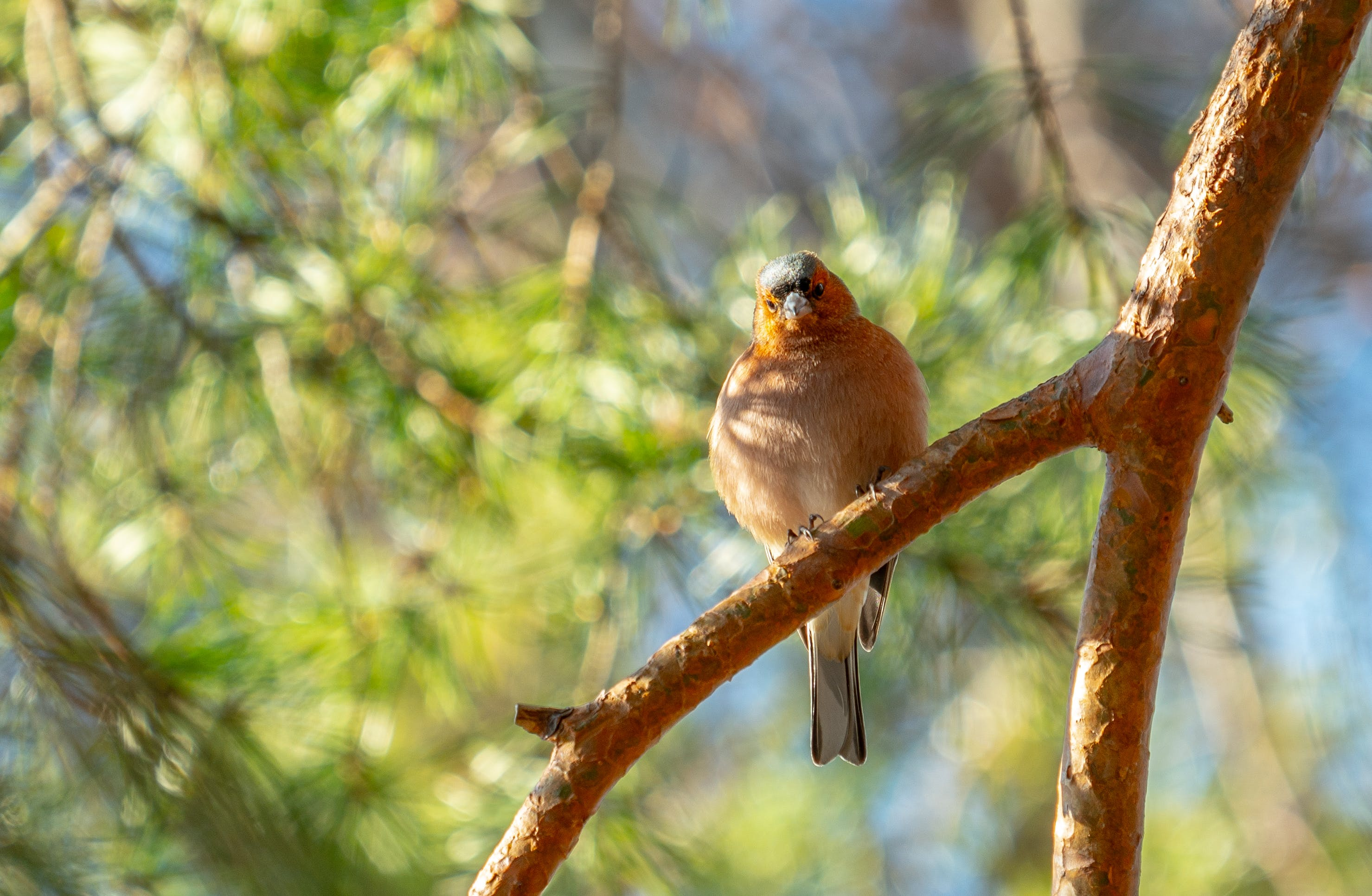 天性, 樹, 鳥 的 免費圖庫相片