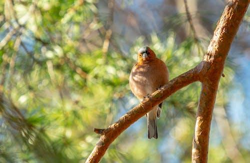 Gratis lagerfoto af fugl, natur, træ