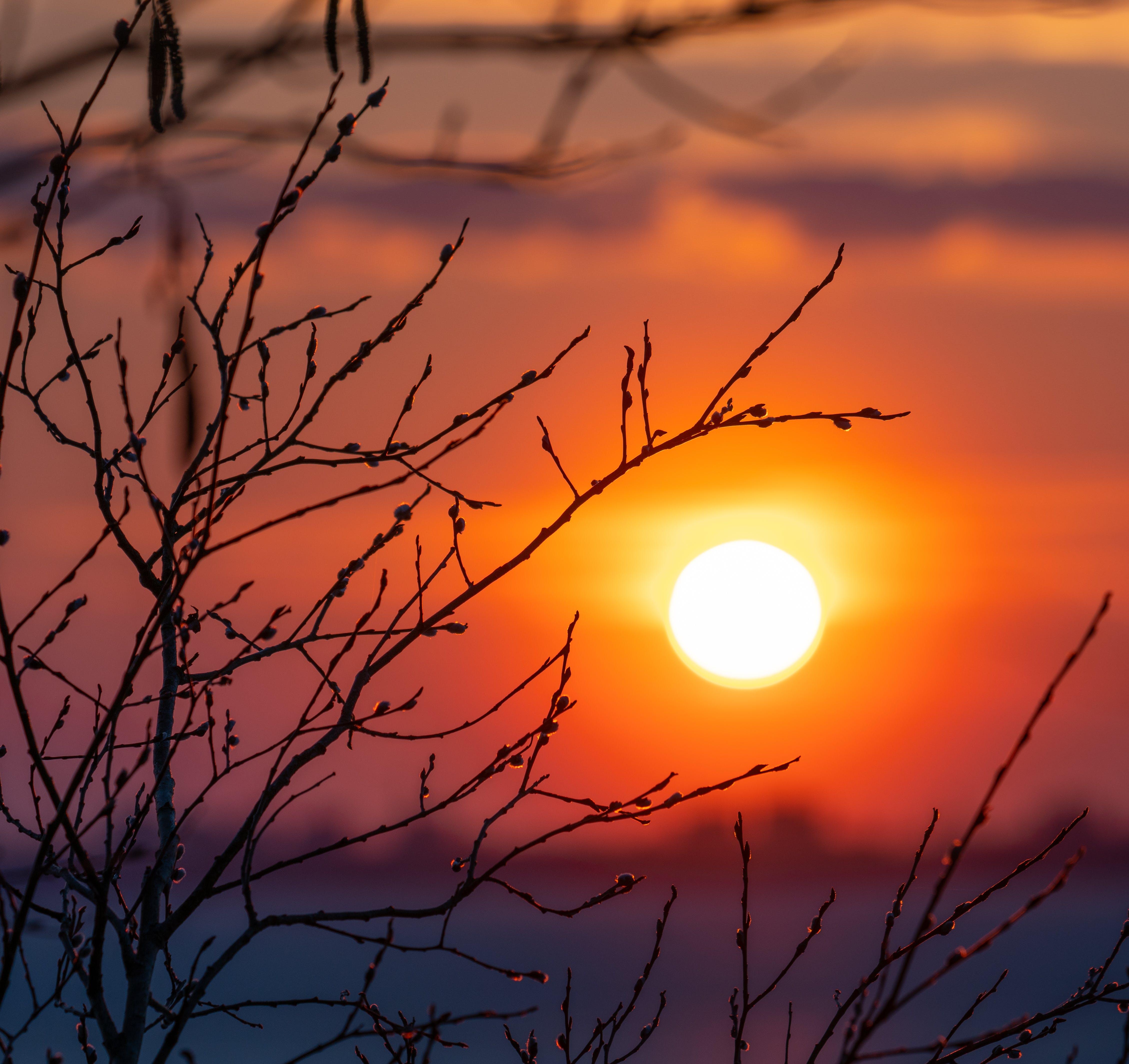 Gratis lagerfoto af fjeder, solnedgang, træ