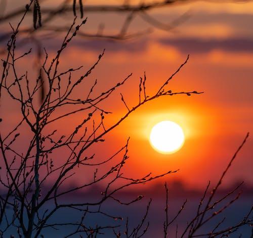 Ingyenes stockfotó fa, naplemente, rugó témában