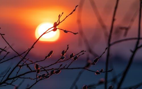 Gratis lagerfoto af fjeder, natur, solnedgang, træer