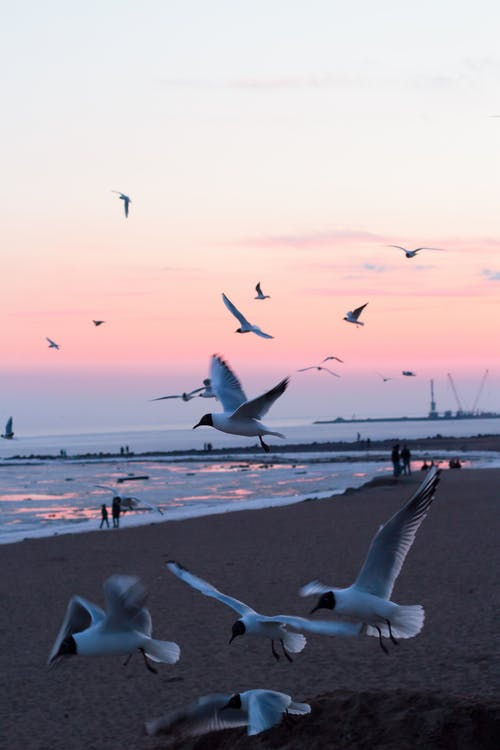 Photo of Birds Flying On Seaeshore
