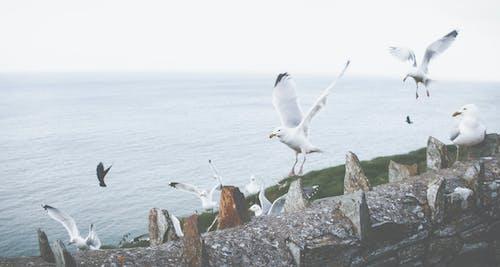 Kostnadsfri bild av dagsljus, fåglar, fiskmåsar, fjädrar