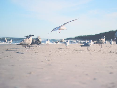 White Birds on Beach