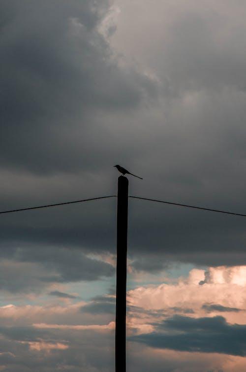 Imagine de stoc gratuită din contur, închis la culoare, nori, pasăre