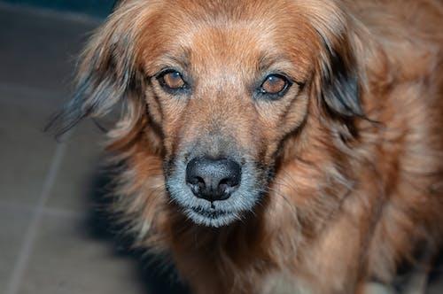Kostnadsfri bild av djur, hund