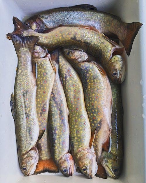Foto profissional grátis de peixe