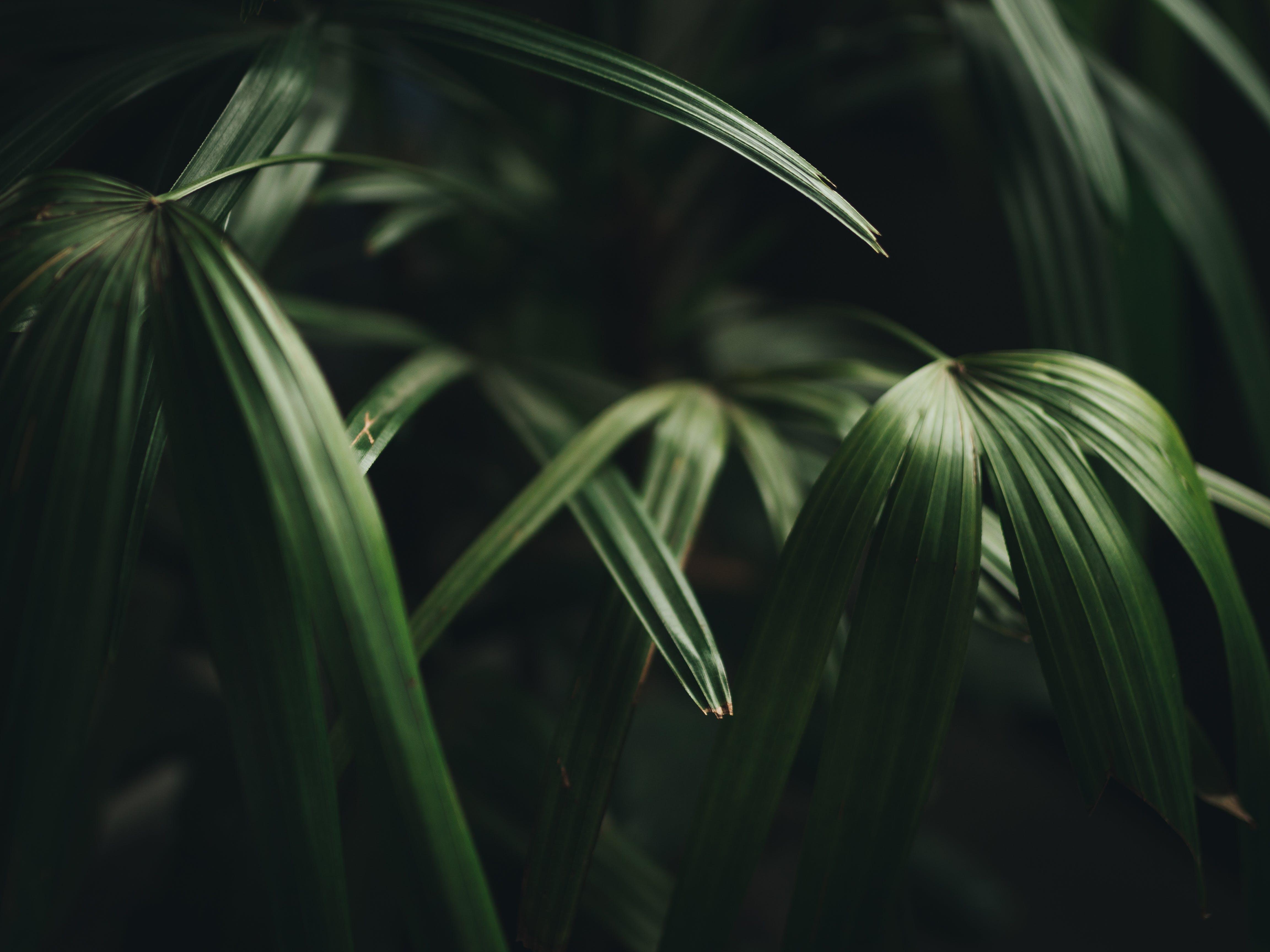 園林植物, 增長, 天性, 戶外 的 免費圖庫相片