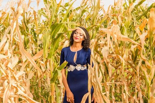 건강한, 경치, 경치가 좋은, 농경지의 무료 스톡 사진