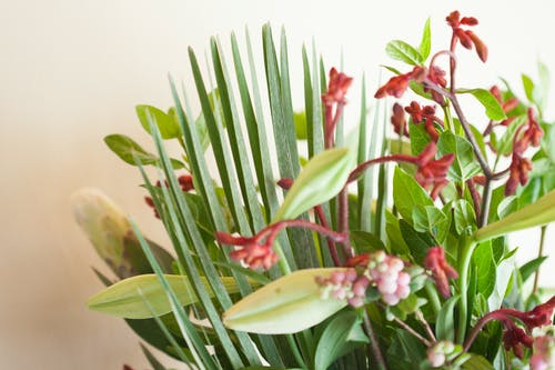 Fotobanka sbezplatnými fotkami na tému krása v prírode, kvety, kytica, nádherné kvety
