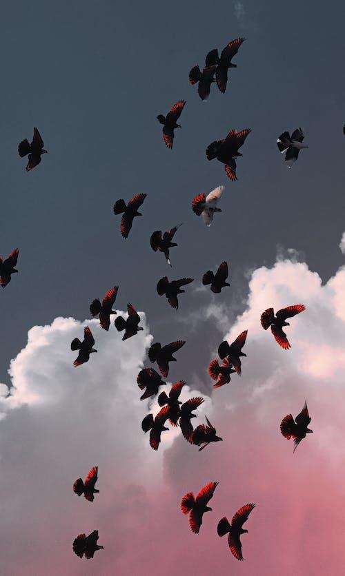 Безкоштовне стокове фото на тему «зграя птахів, небо, птахи, пташина зграя»
