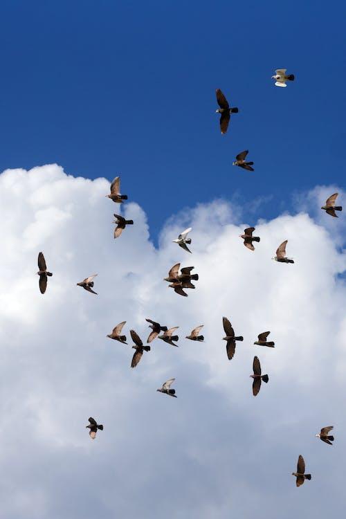 Безкоштовне стокове фото на тему «зграя птахів, небо, птахи, синій»