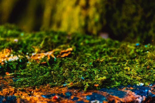 Free stock photo of close up, close-up, evergreen, forest