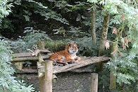 wood, trees, animal
