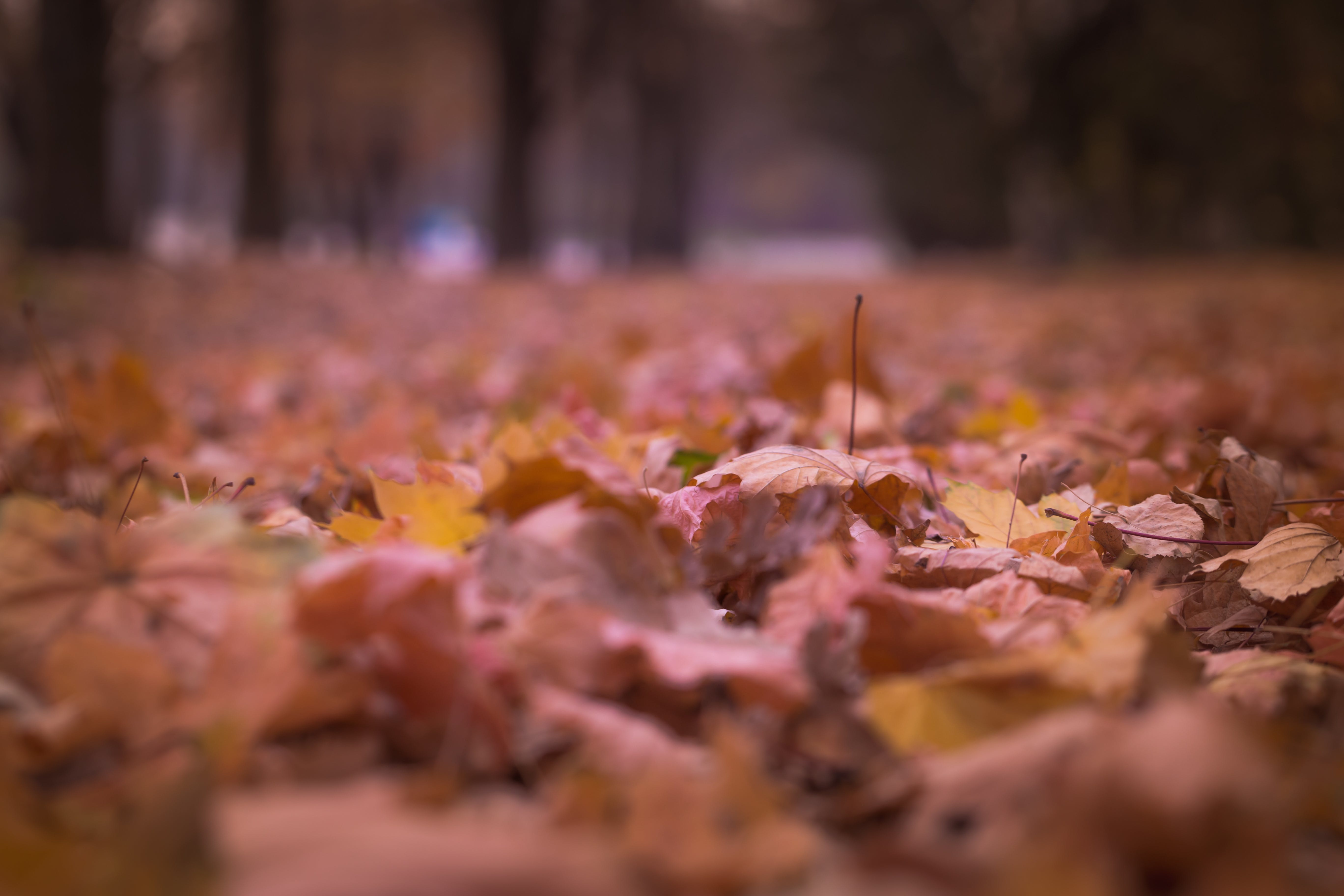 Withered Leaves on Floor Focus Photography
