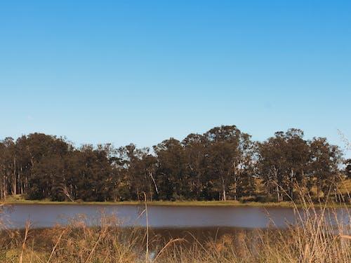 Gratis lagerfoto af #natur, #outdoorchallenge