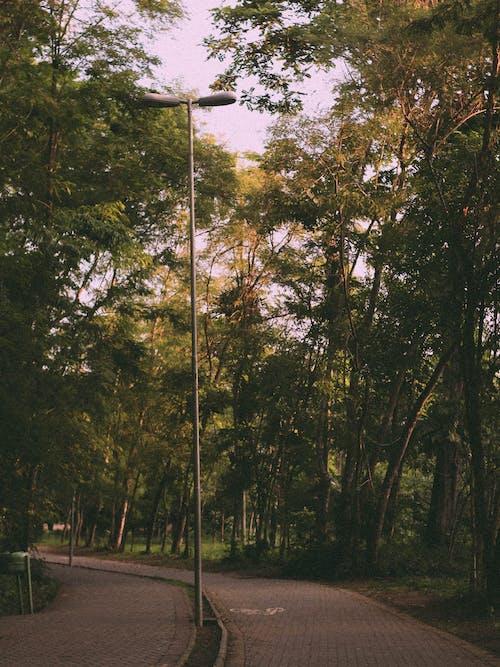 Δωρεάν στοκ φωτογραφιών με outdoorchallenge, δέντρα, δρόμος, λάμπα δρόμου