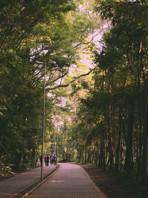 Ingyenes stockfotó fák, környezet, kültéri kihívás, ösvény témában