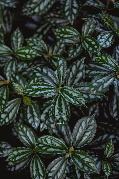 Bahçe, bitki, büyüme, yapraklar içeren Ücretsiz stok fotoğraf