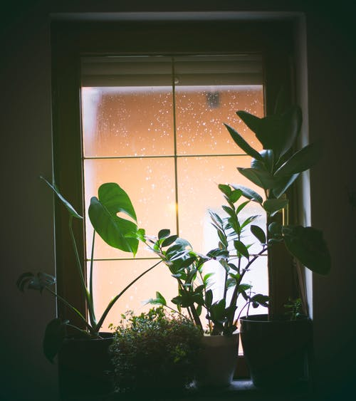 Plants Near The Window