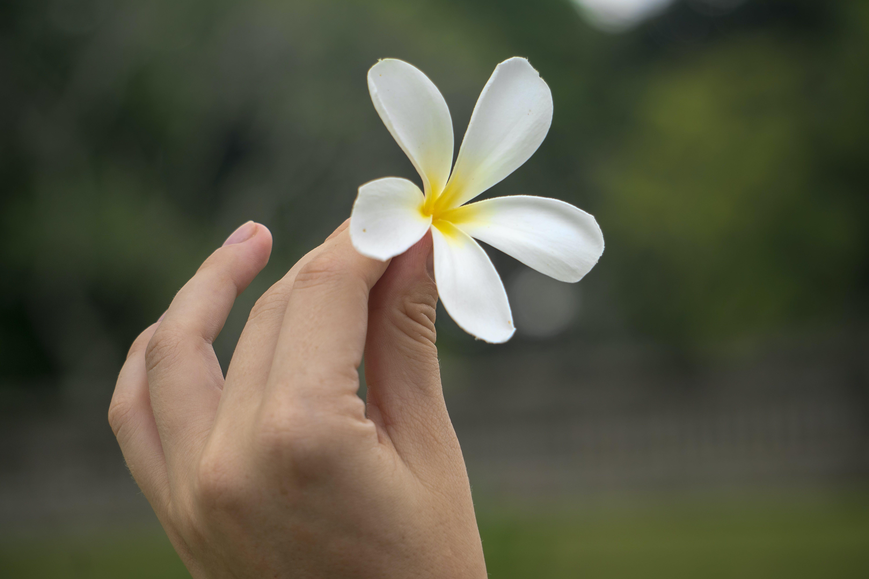 Immagine gratuita di asia, bel fiore, dita, fiore