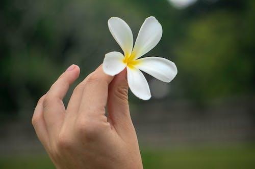 Foto profissional grátis de Ásia, dedos, flor, flor bonita